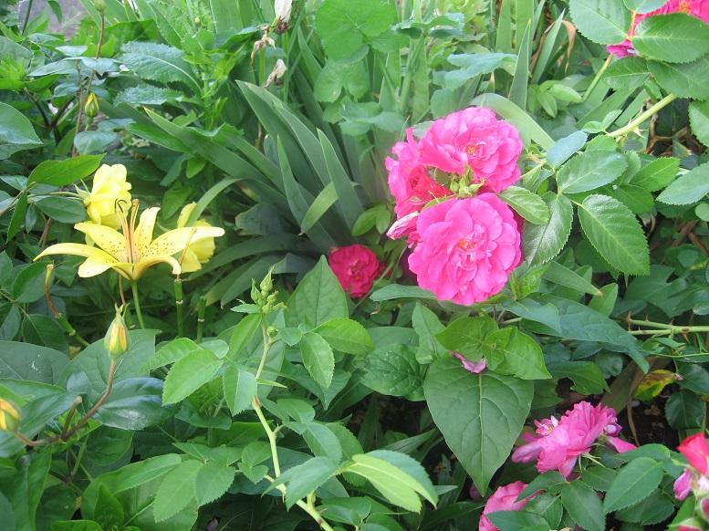 Цветы тёщины (6)