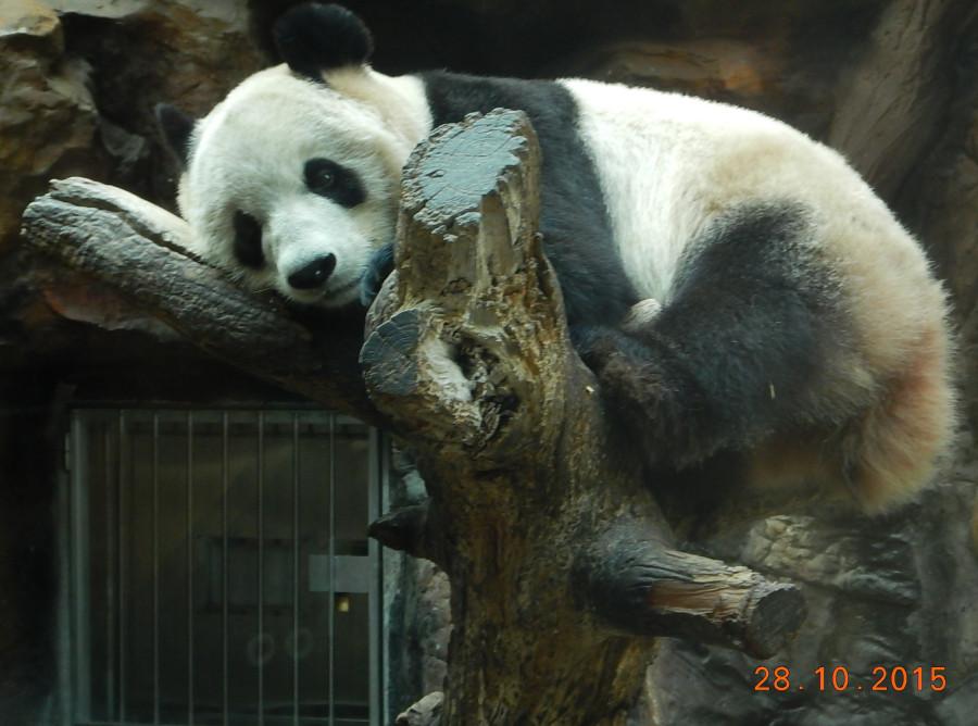 Панда (перекур).JPG