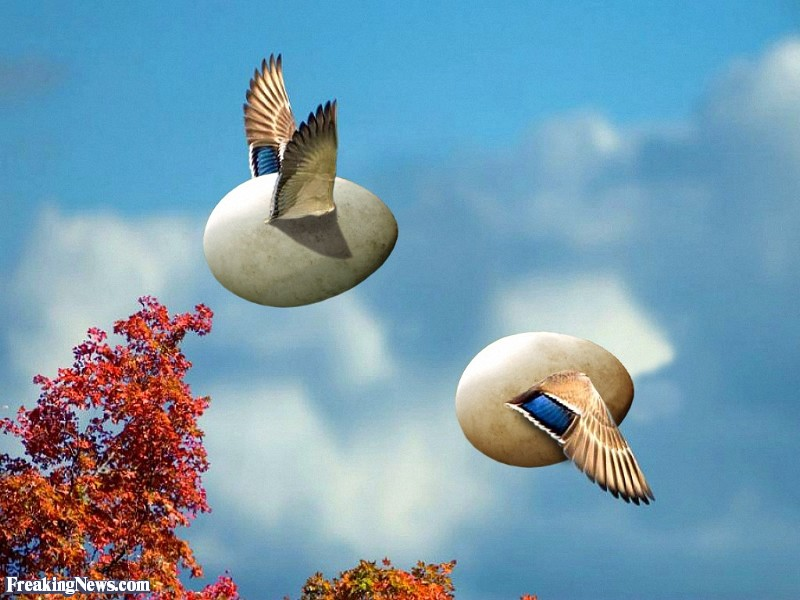 Eggs-with-Wings-Flying-in-the-Sky--127917