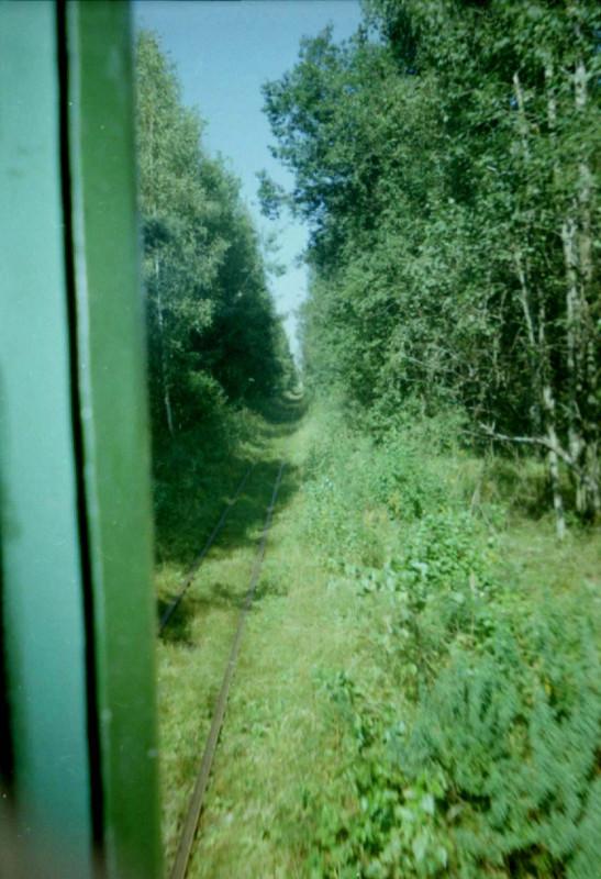 Колея во мхах, август 2004 г. (А. Белаш)