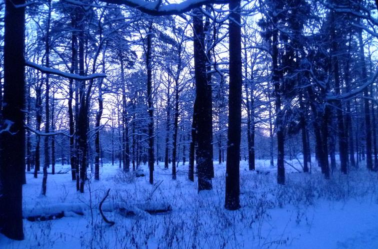 07 - Синий лес