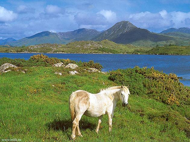 10 - ирландия 109 88