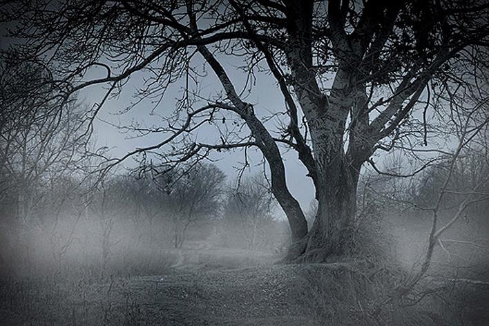 14 - туман 4092 88