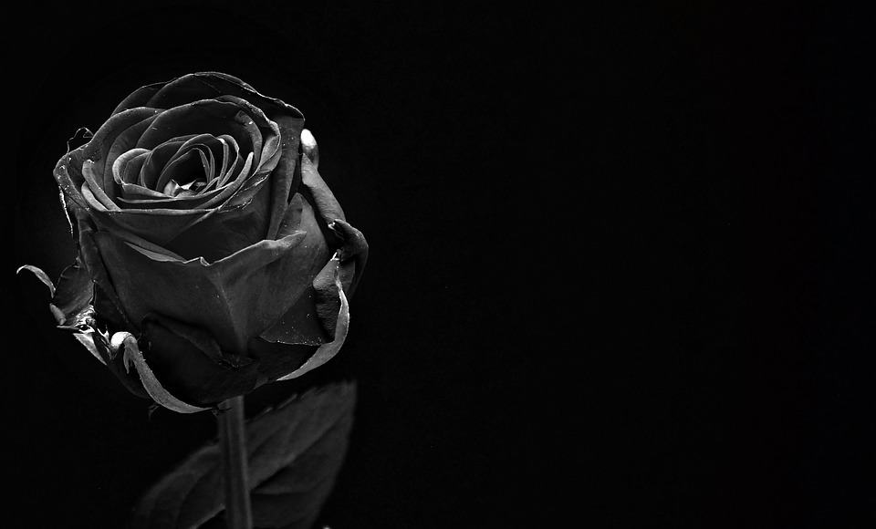 black-and-white-rose-image