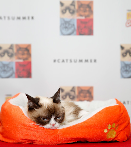 Cat+Summer+Video+Launch+Party+arAMAIUES3Nl