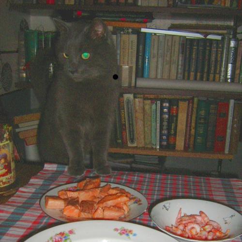 суп с котом соломоном