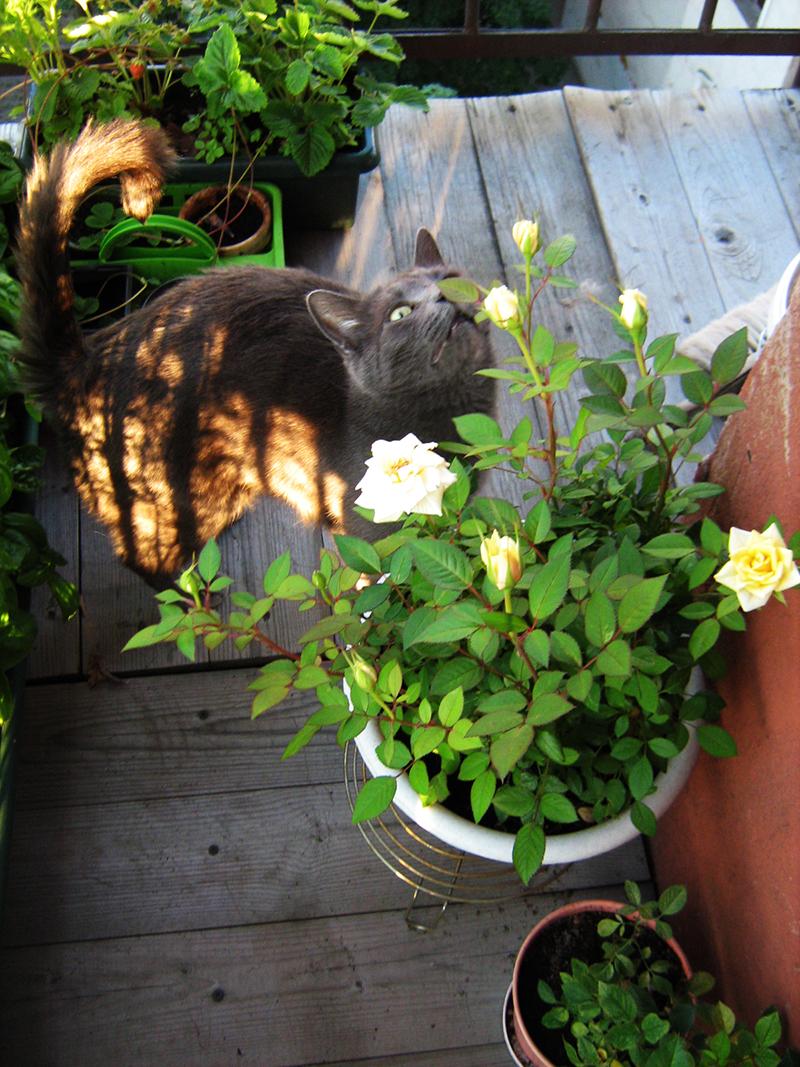 барсик в саду