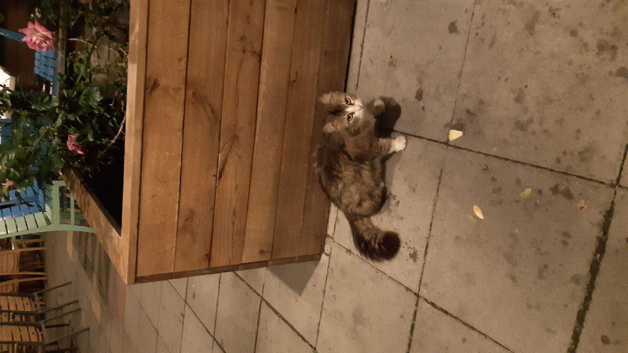 Пысы. Всё,  прилетели, заселились и кормим местных котиков