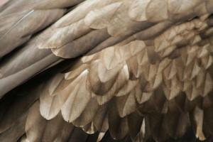 Перья птиц в магии 23005_300