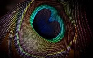 Перья птиц в магии 25972_300