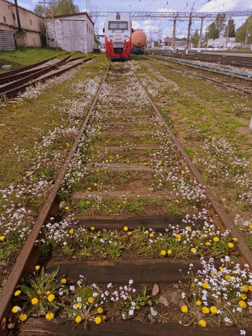 На запасном ̶а̶э̶р̶о̶д̶р̶о̶м̶е̶ пути: весна и бронепоезд.) Вечная весна и поездатый бронепоезд.)