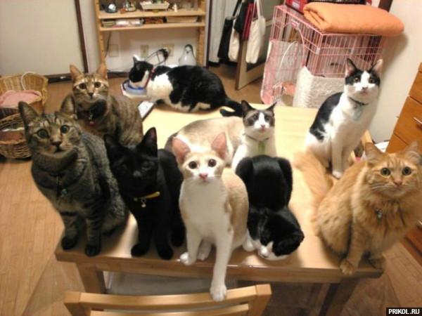cats-59