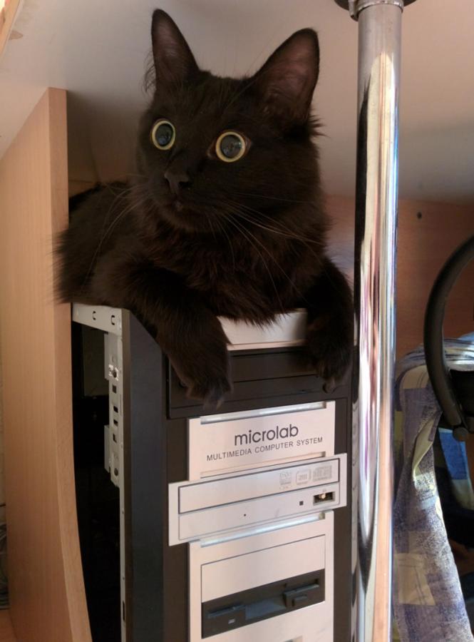 кот-живность-1720441