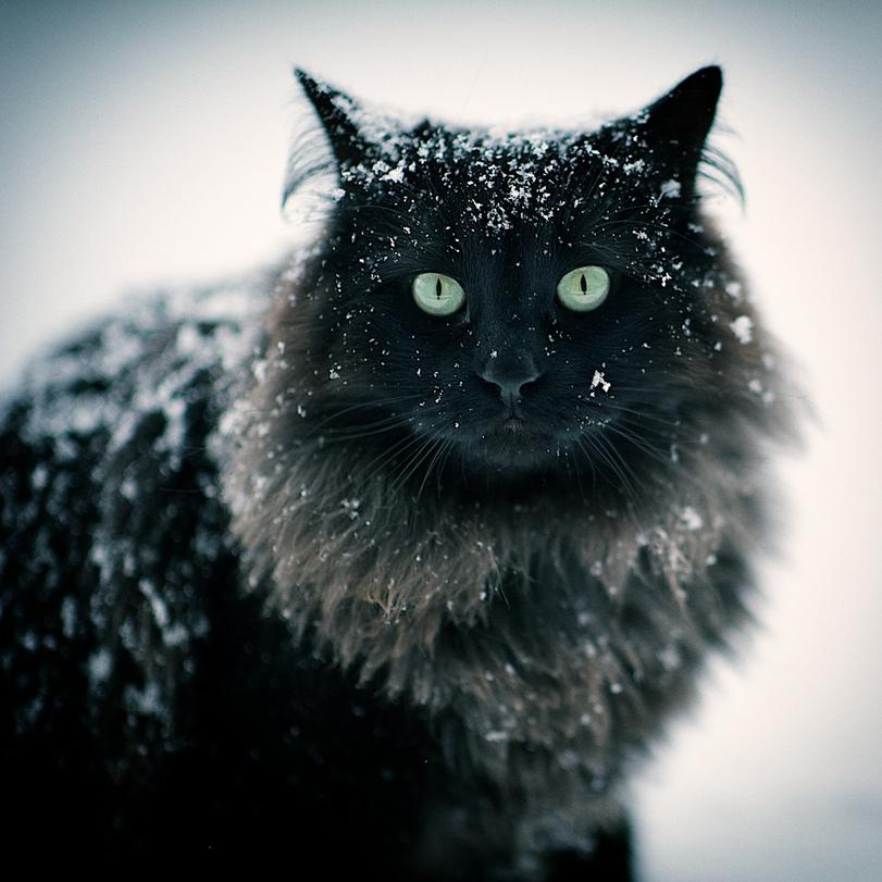 котэ-живность-снег-1720118