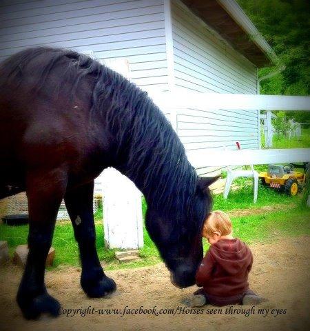 horselittleboy