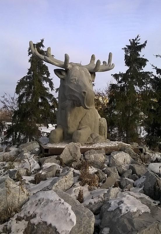 Лось всамом центре Миасского (22.11.2014)