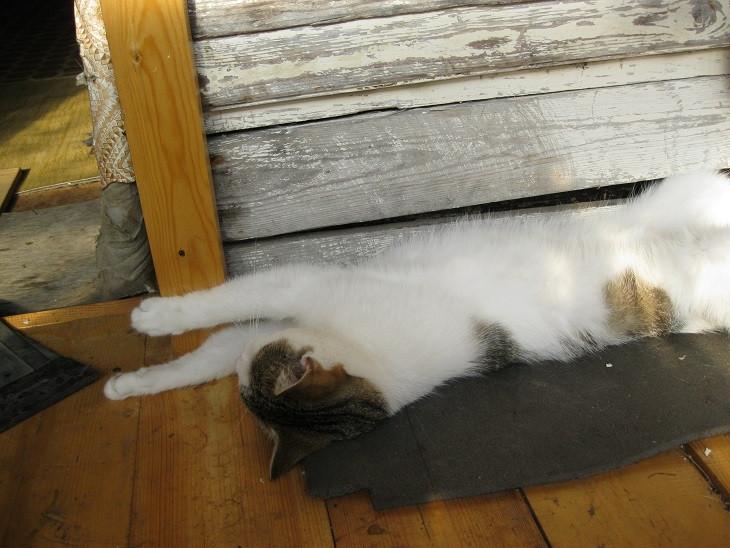 IMG_кошка чистая