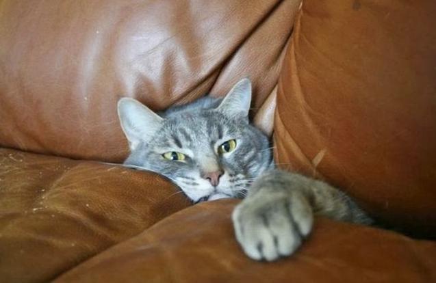 счастливая кошка