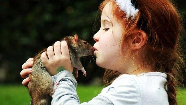 rat_kiss