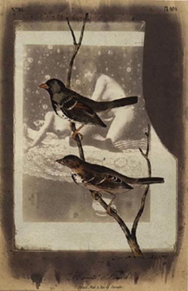 paul-cava-finch-1980-via-anamorfose