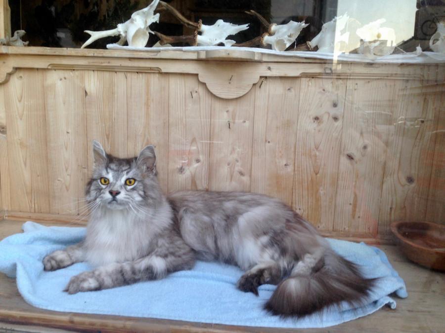 чучело (котик)