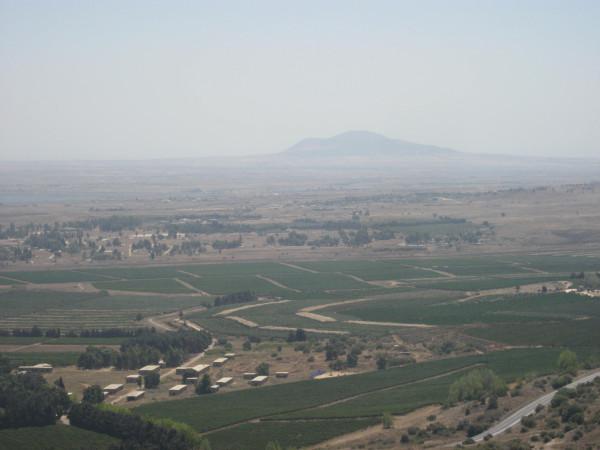 Golan 307