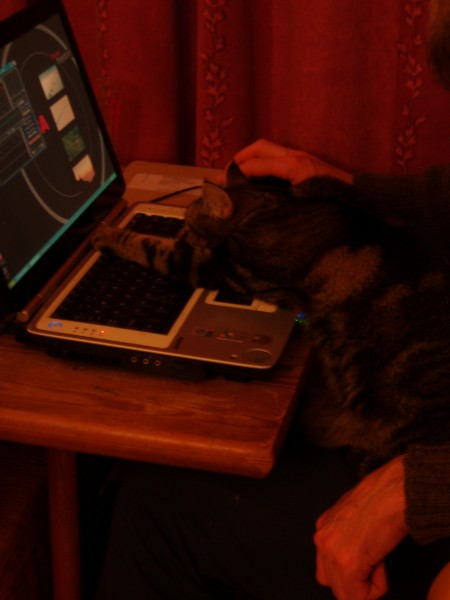 haggis - the paw that controls the keyboard controls the world