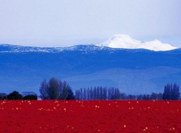 российский флаг в природе