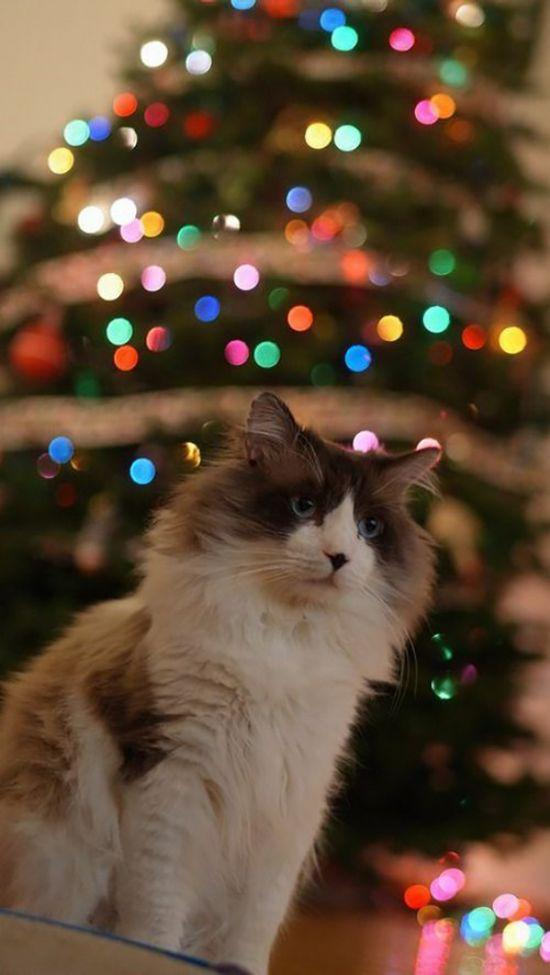 Рождественская киска