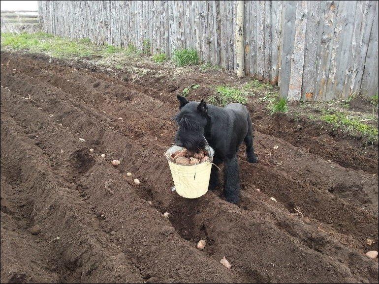 пес помогает хозяевам
