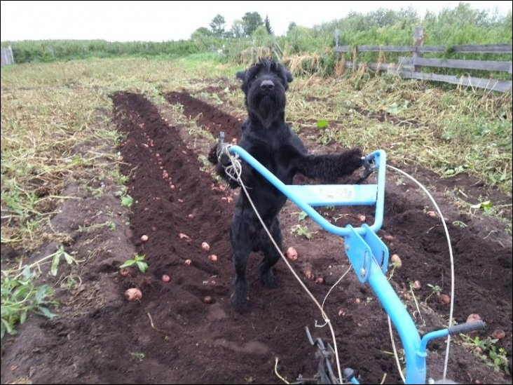 собака помогает хозяевам