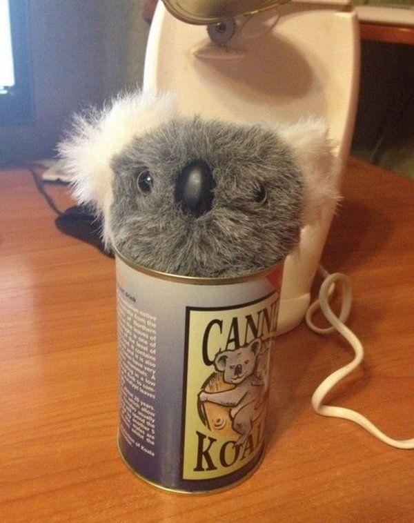 консервы из Австралии