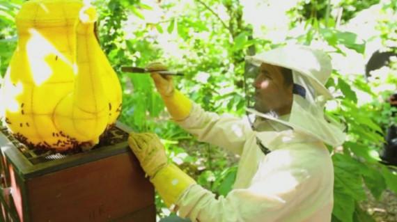 60 000 пчел вылепили миленький чайник