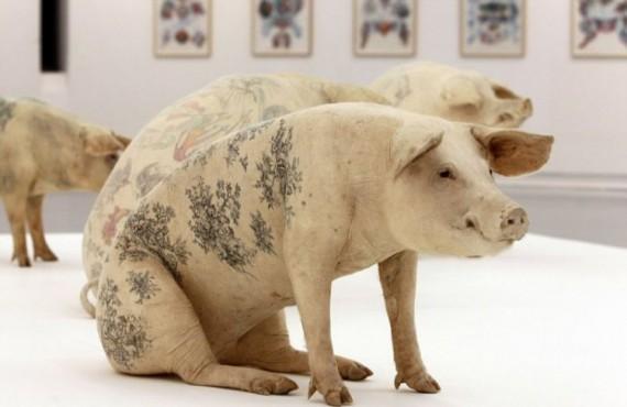 Татуированные свиньи