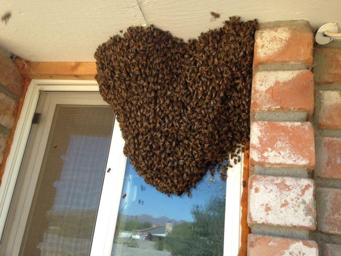 Грамотный дезинсектор не станет бездумно ломать пчелиный улей