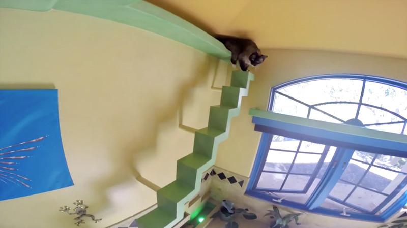 Это же как надо любить кошек, чтобы построить такое