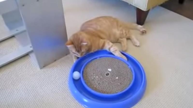 Лучшая кошачья игрушка