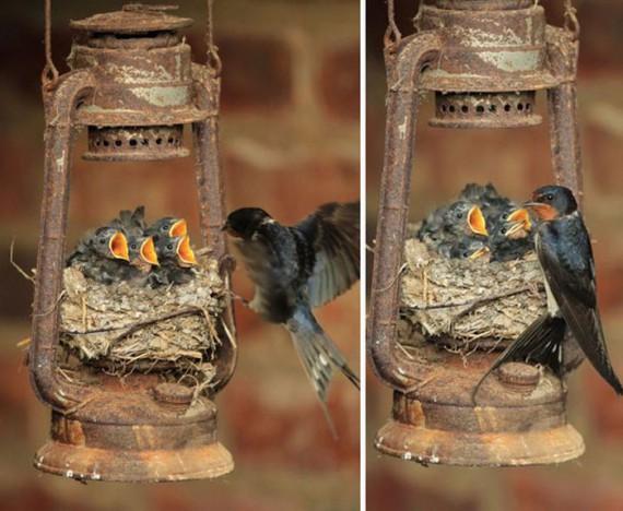 Птичьи гнёзда в неожиданных местах