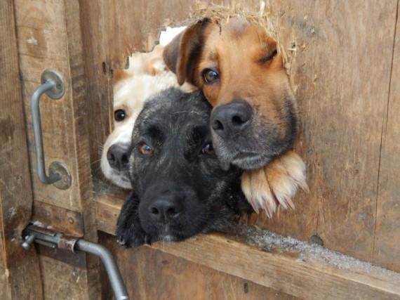 Собаки, которые просто хотели поздороваться