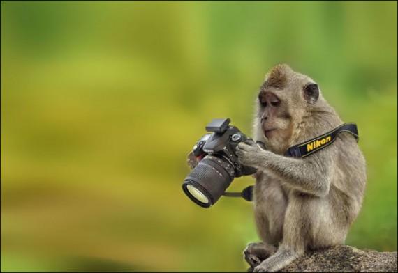 1438213750_animals-and-camera-006