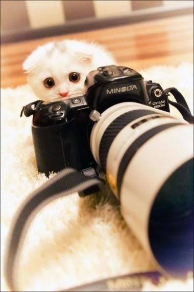 1438213787_animals-and-camera-007