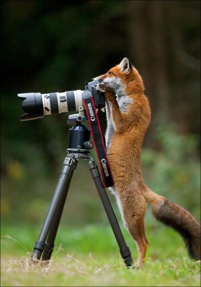 1438213788_animals-and-camera-004