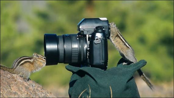 Животные, желающие стать фотографом
