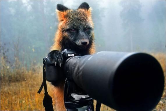1438213896_animals-and-camera-017