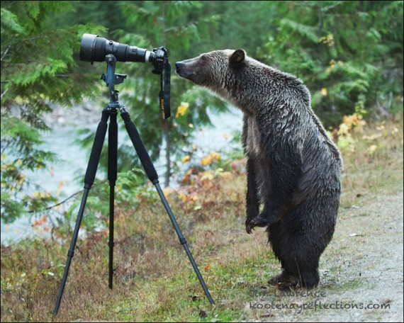 1438213897_animals-and-camera-018