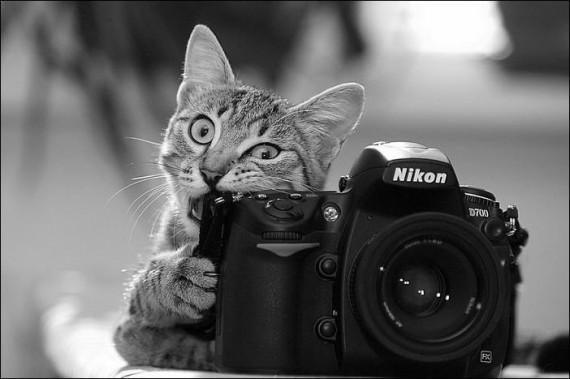 1438213899_animals-and-camera-011