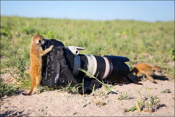 1438213908_animals-and-camera-020