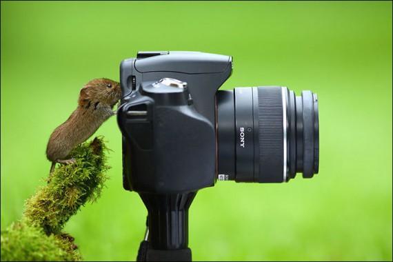 1438213913_animals-and-camera-016