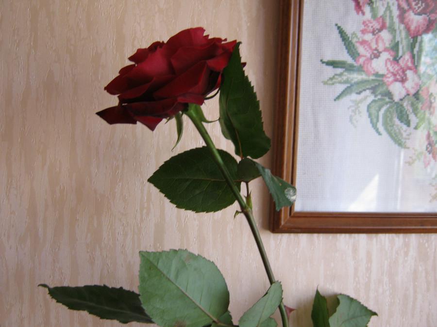 розу подарили дети 29 апр 2011