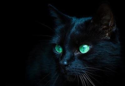 Жил да был чОрный кот за углом!